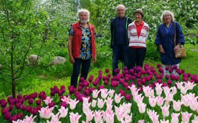Tulpaner i Söderhult
